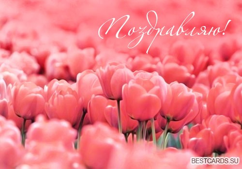 """Открытка """"Поздравляю!"""" с тюльпанами"""