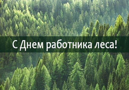 с Днем работника леса!